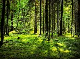 Miško priežiūra