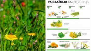 Vaistažolės Lietuvoje